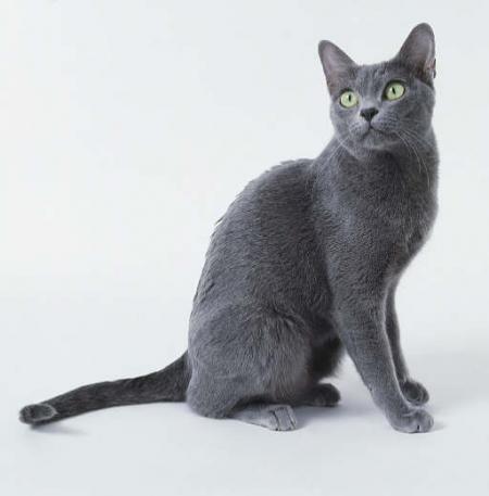 Korat Koty