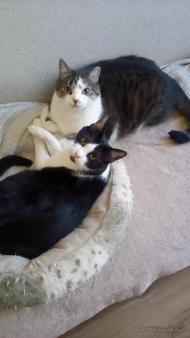 Gucio i Krokiet szukają domu!