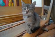 5 małych kociaków szuka kochającego domu