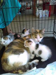 Kocia rodzina do pilnej adopcji!