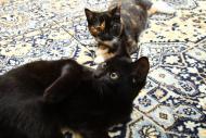 Franio, Nutka i Matylda szukają domu!